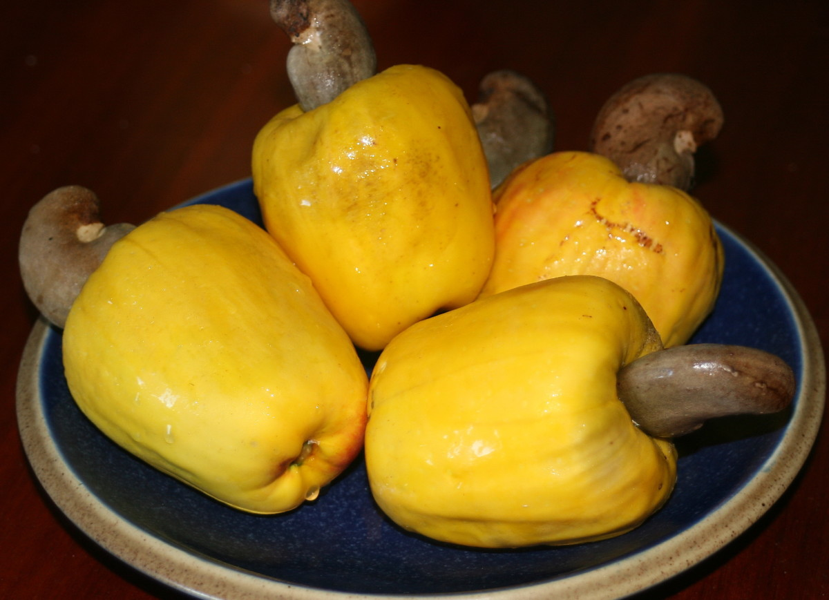 Cashew fruits and nuts