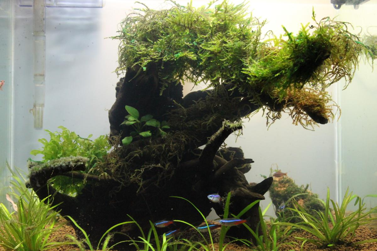 My Nano Nature Tank with a white opague background.