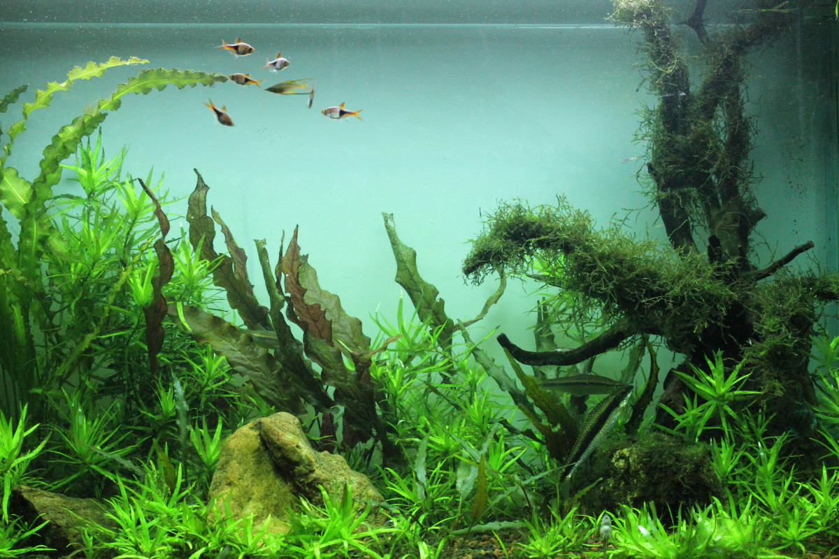 Black or White? Choosing the right background for your Aquarium