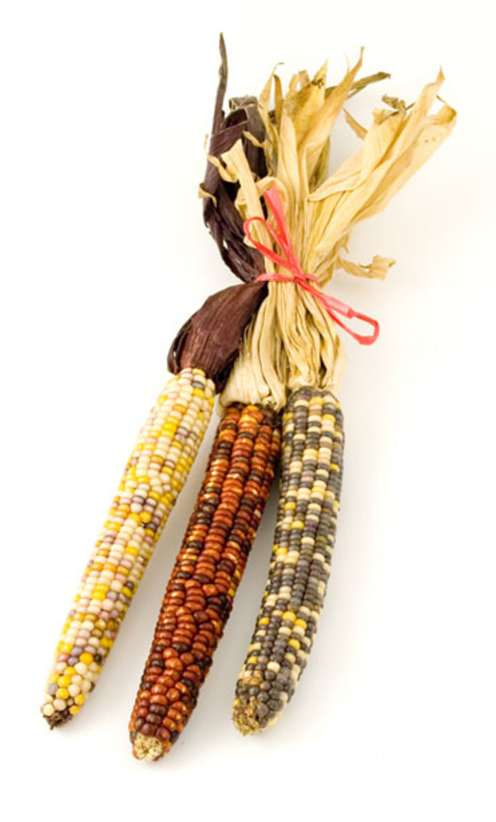 How the Iroquois Tribes Grew Corn