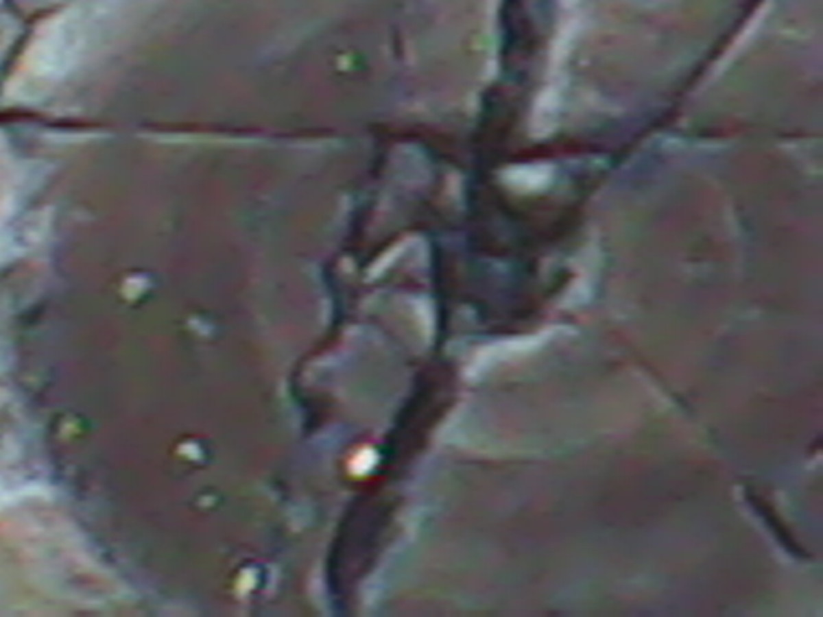 Macro image using 4X digital zoom.