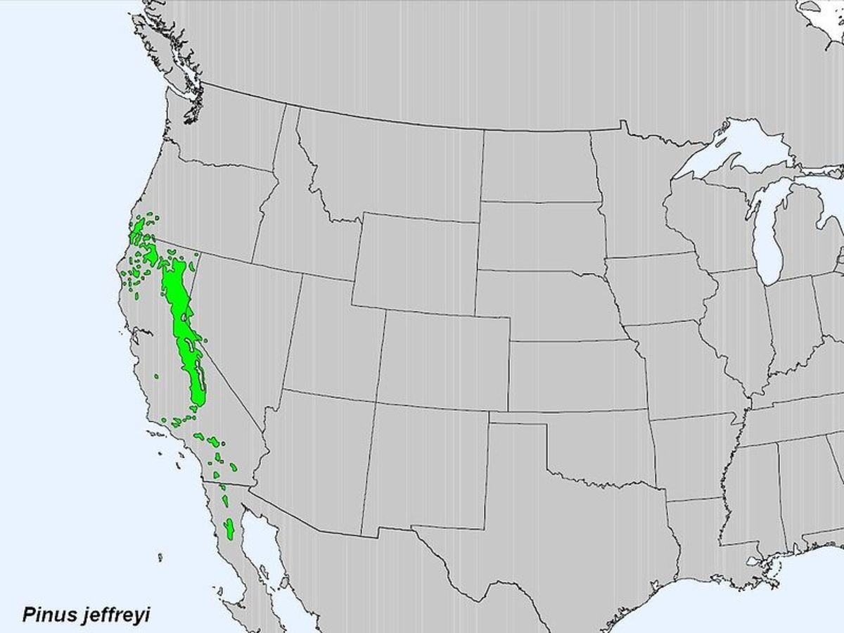 The range of the Jeffrey Pine.
