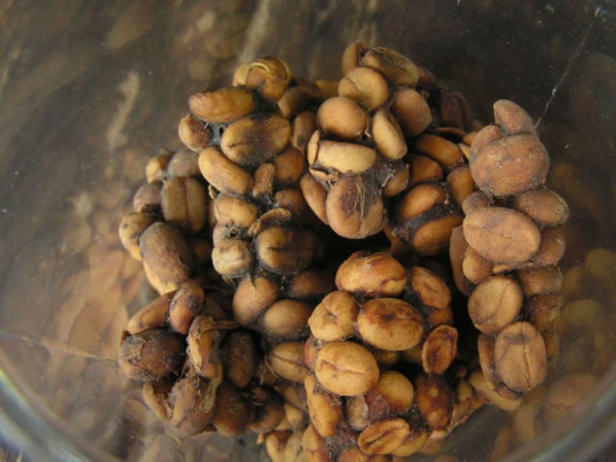 Kopi Luwak, Indonesia  -This is the rarest and most expensive coffee in the world, but still you might want to reconsider it, when someone politely invites you to sip from a mug full of it. Why? Because it is made out of the excrements of a creature