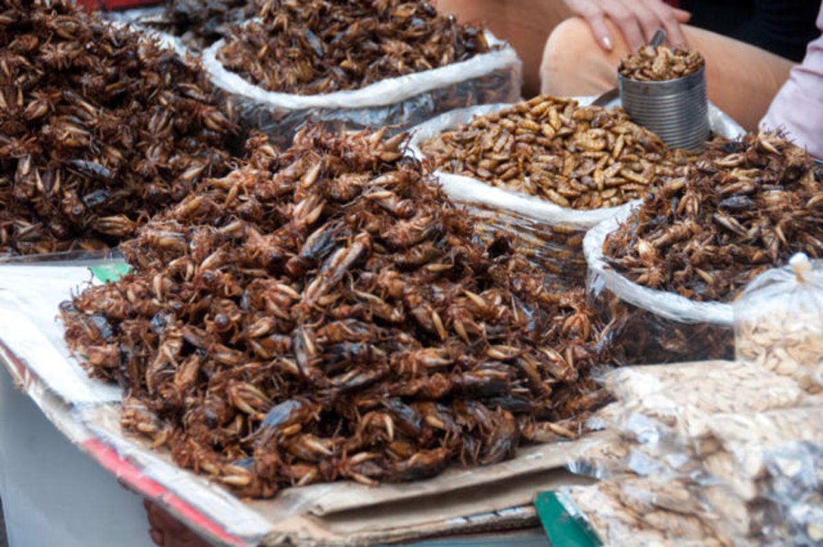 Bugs  -Insects make an old dish in many parts of the world, except Europe and North America. Served all crispy, they make perfect nutritious snacks!