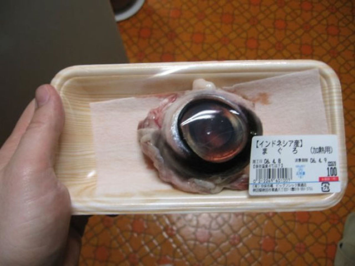 Tuna Eyeball  -Usually served in Japan and China, the tuna eyeball is another weird dish that might not be for everyone's taste. They say it tastes much better than it looks