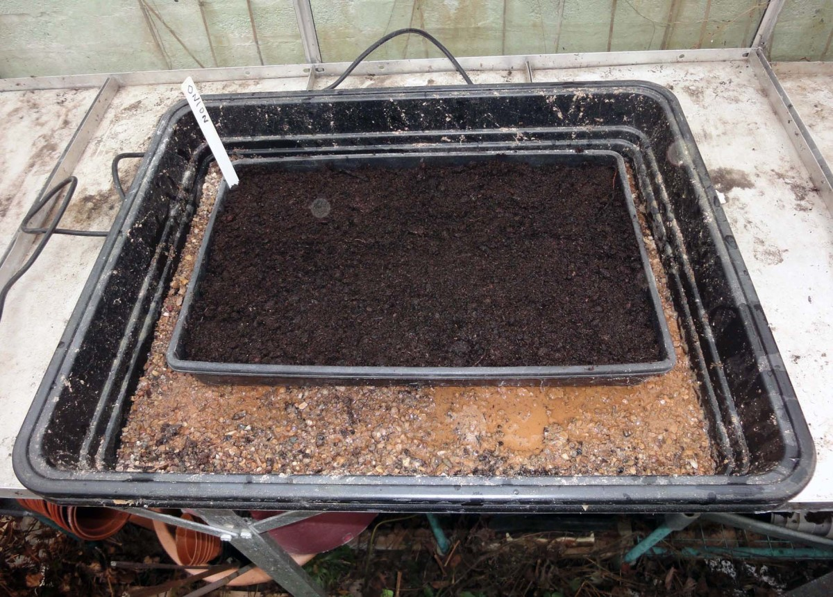 Seeds sown in heated propagator.
