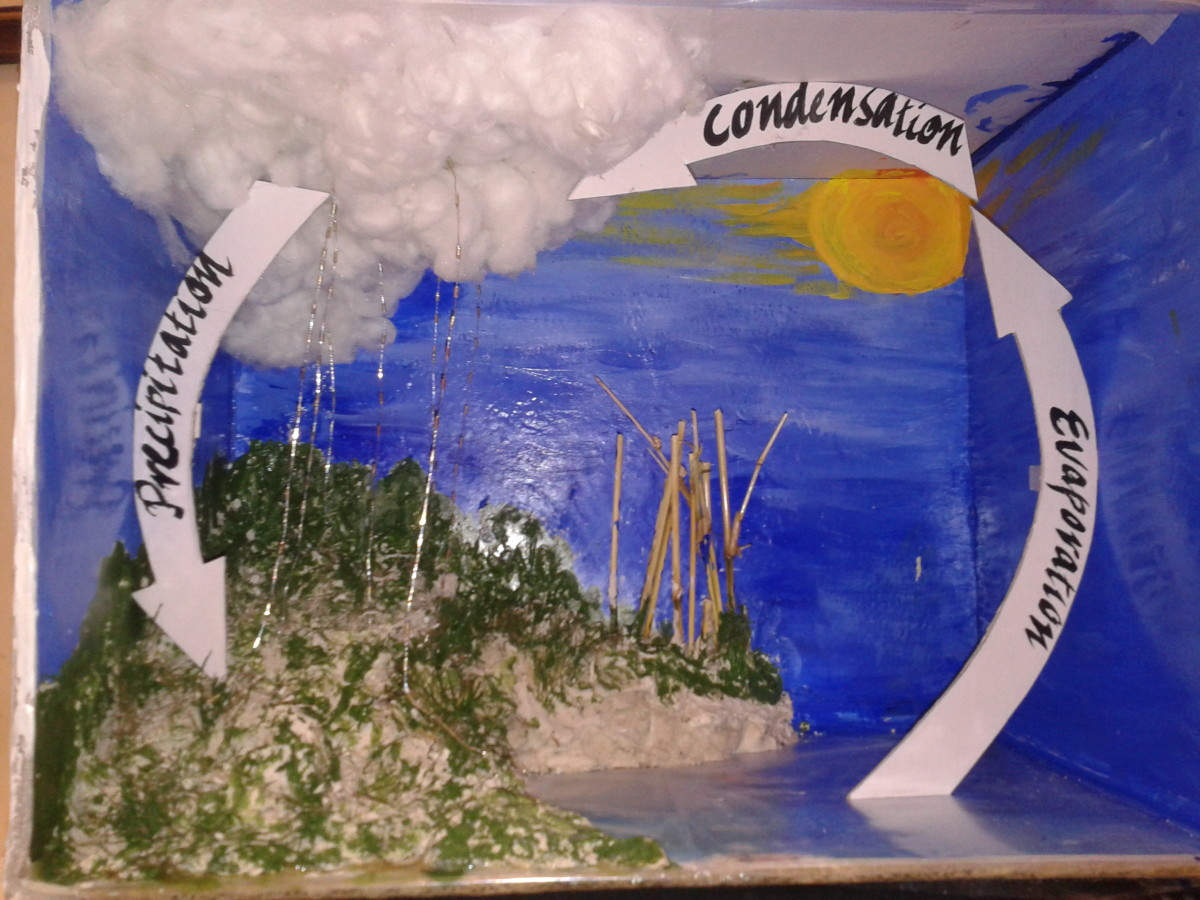 How to Make an Eco-friendly Model on Water Cycle in Kids Science Project