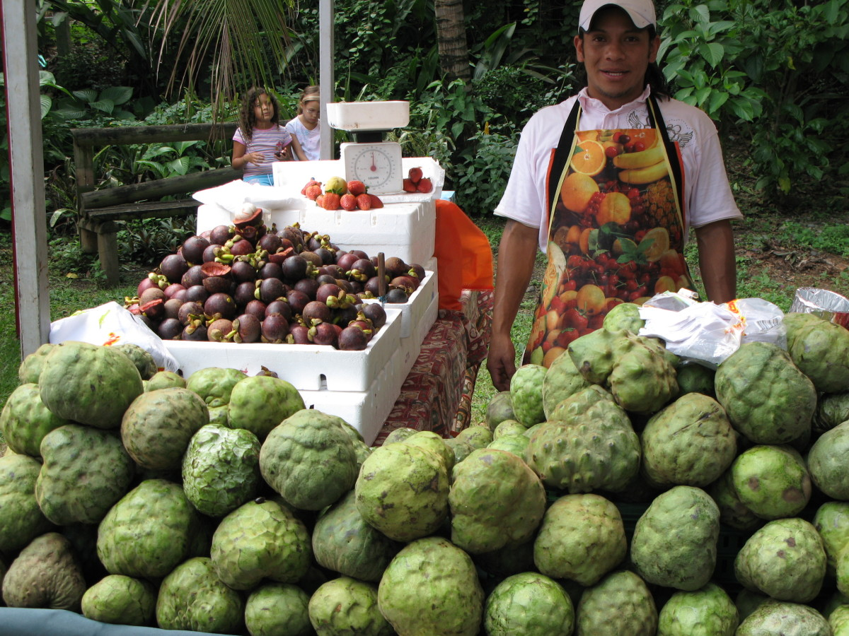 the fruit is one of the largest and may only yield 25 fruits in its first fruit producing year.