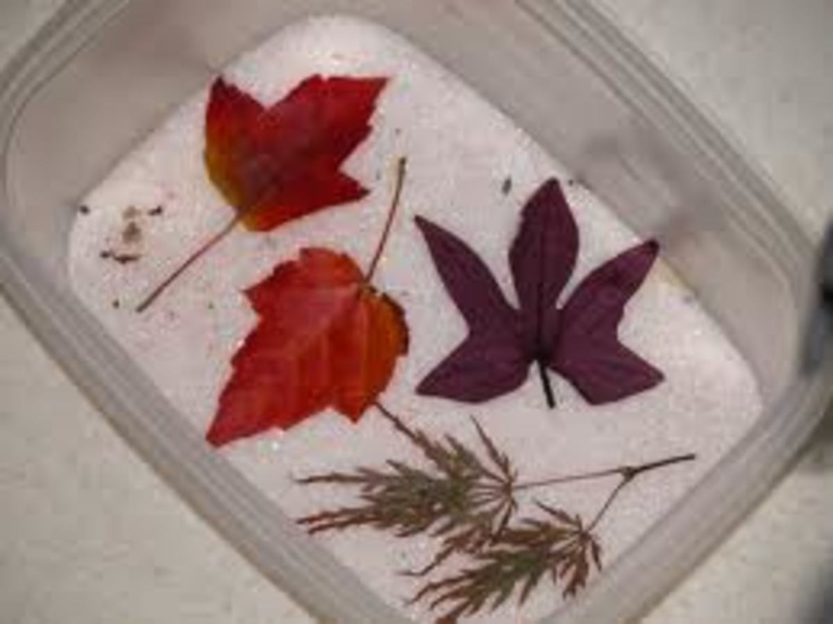 Drying Autumn leaves using Silica gel