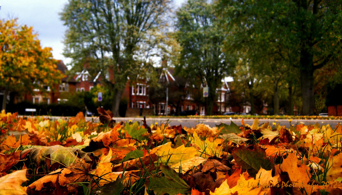 How to Preserve Autumn Leaves With Silica