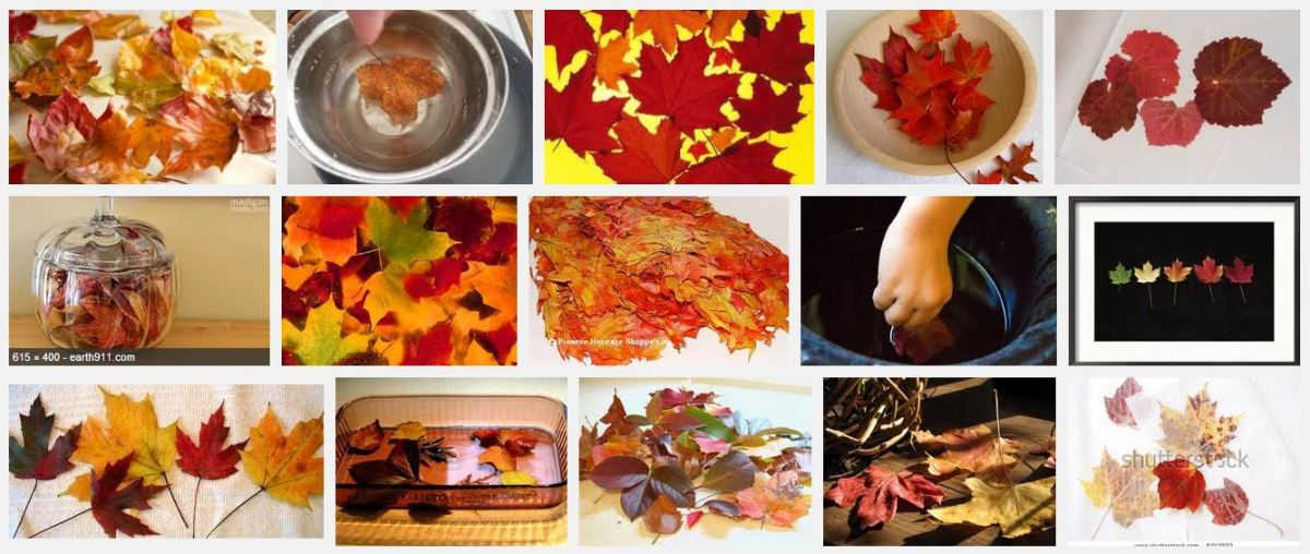 A screenshot of the different ways of preserving autumn leaves and different preserved leaves!