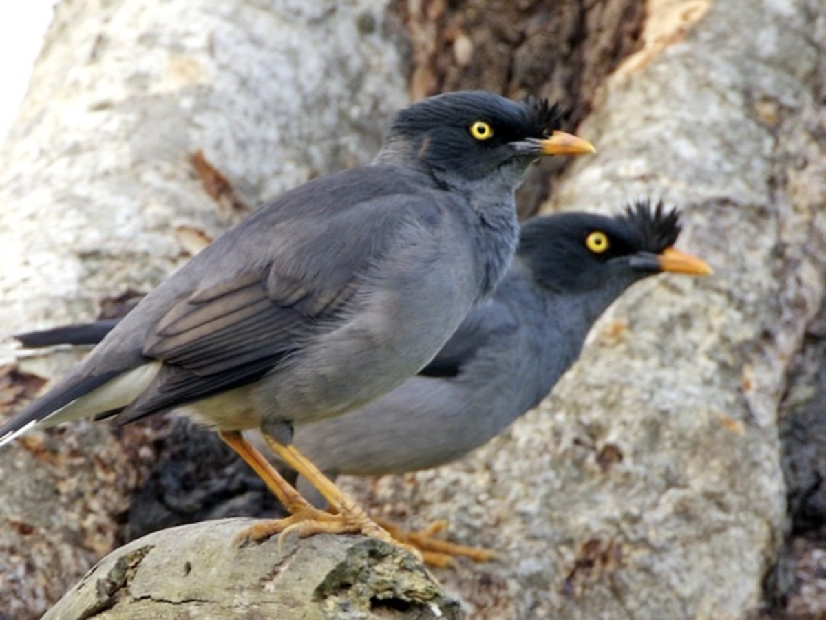 Win-Win relationships are as rare a sight as a pair of exotic Mynah birds.