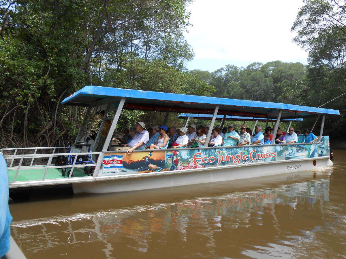 Eco cruise boat on the mangrove swamp of the river.