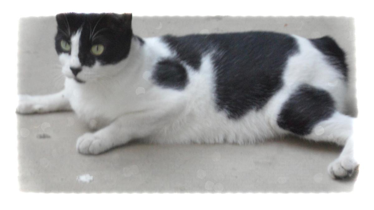 A stray cat on alert