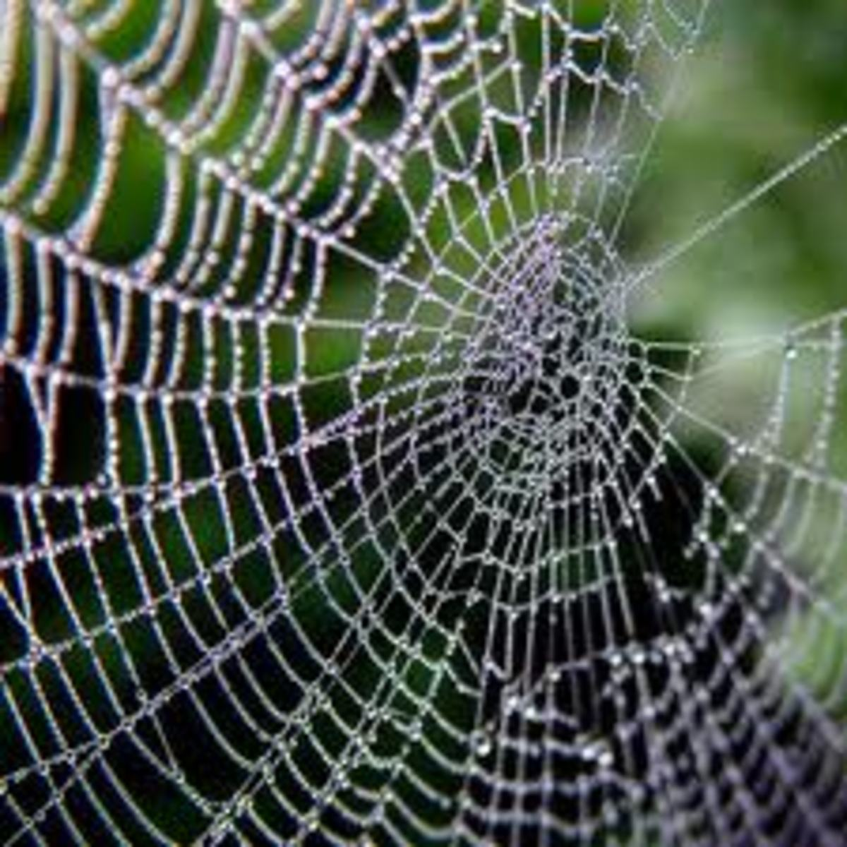 Spider dreams usually represent our own feelings and insecurities in our waking life. Spider dream meanings can vary, both good and bad.