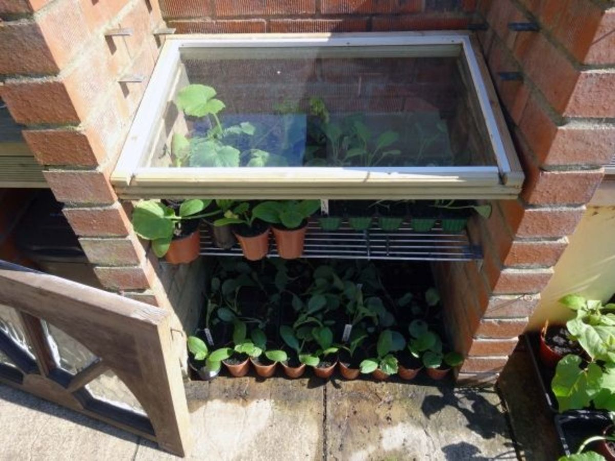 Shelf in cold frame