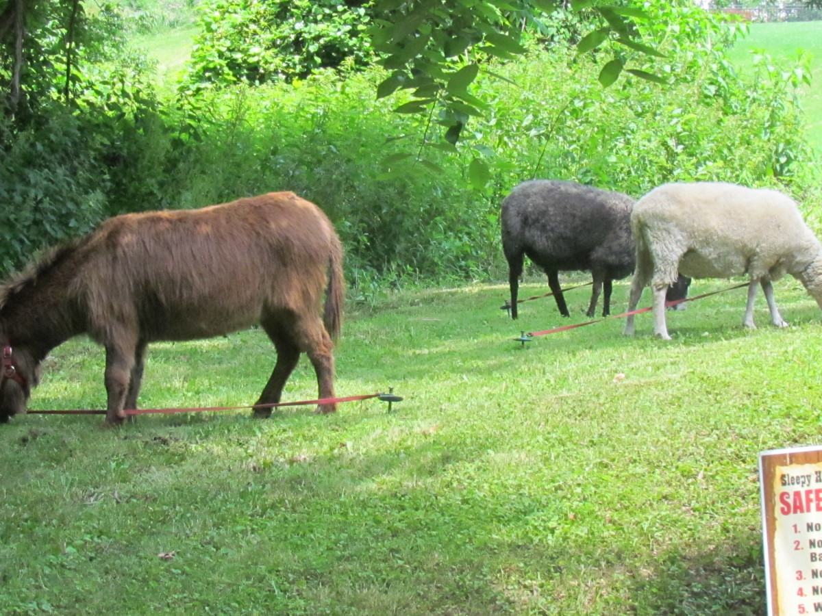 Other animals were also featured at the petting zoo.