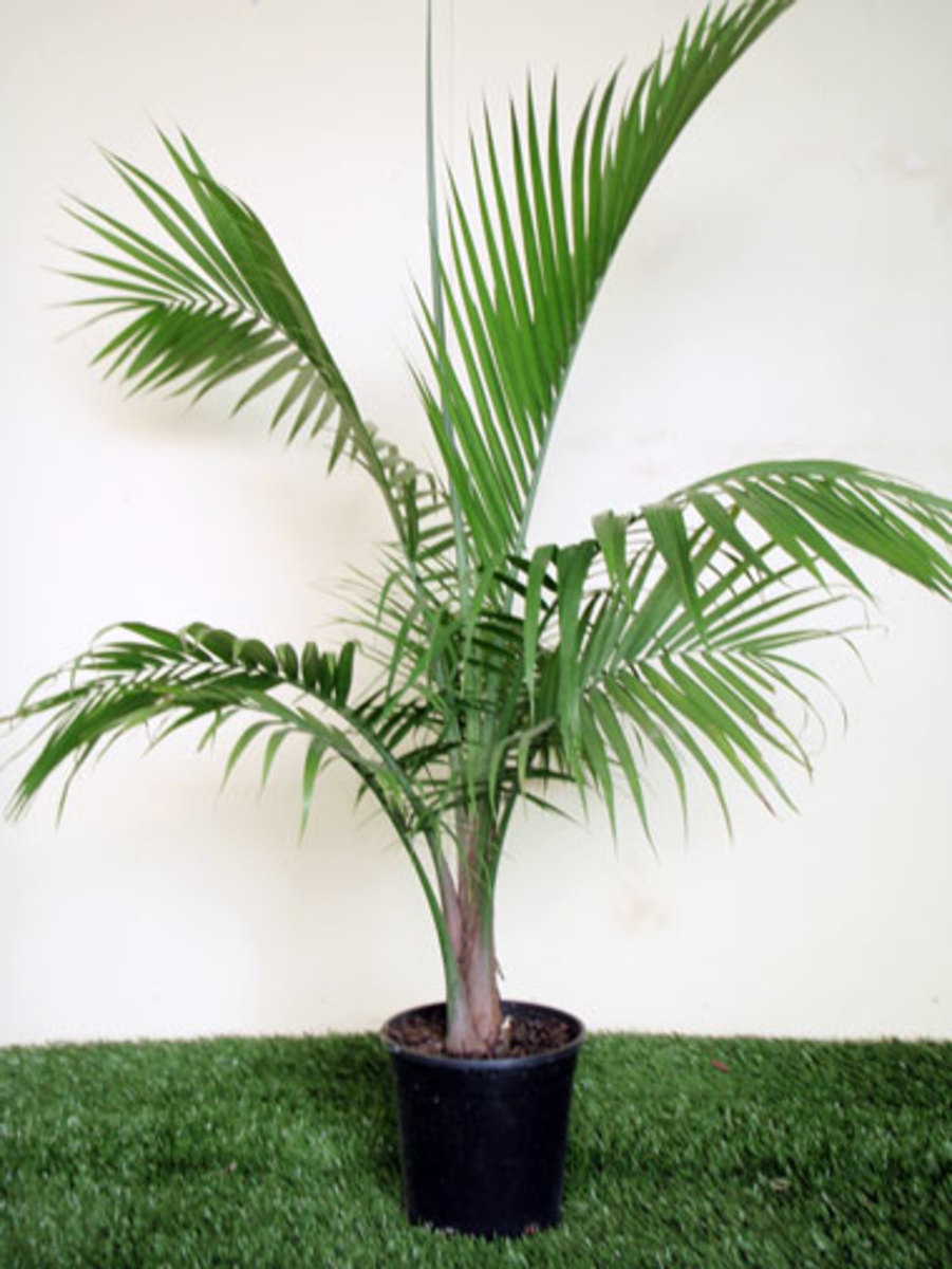 6 Plants That Can Purify Indoor Air