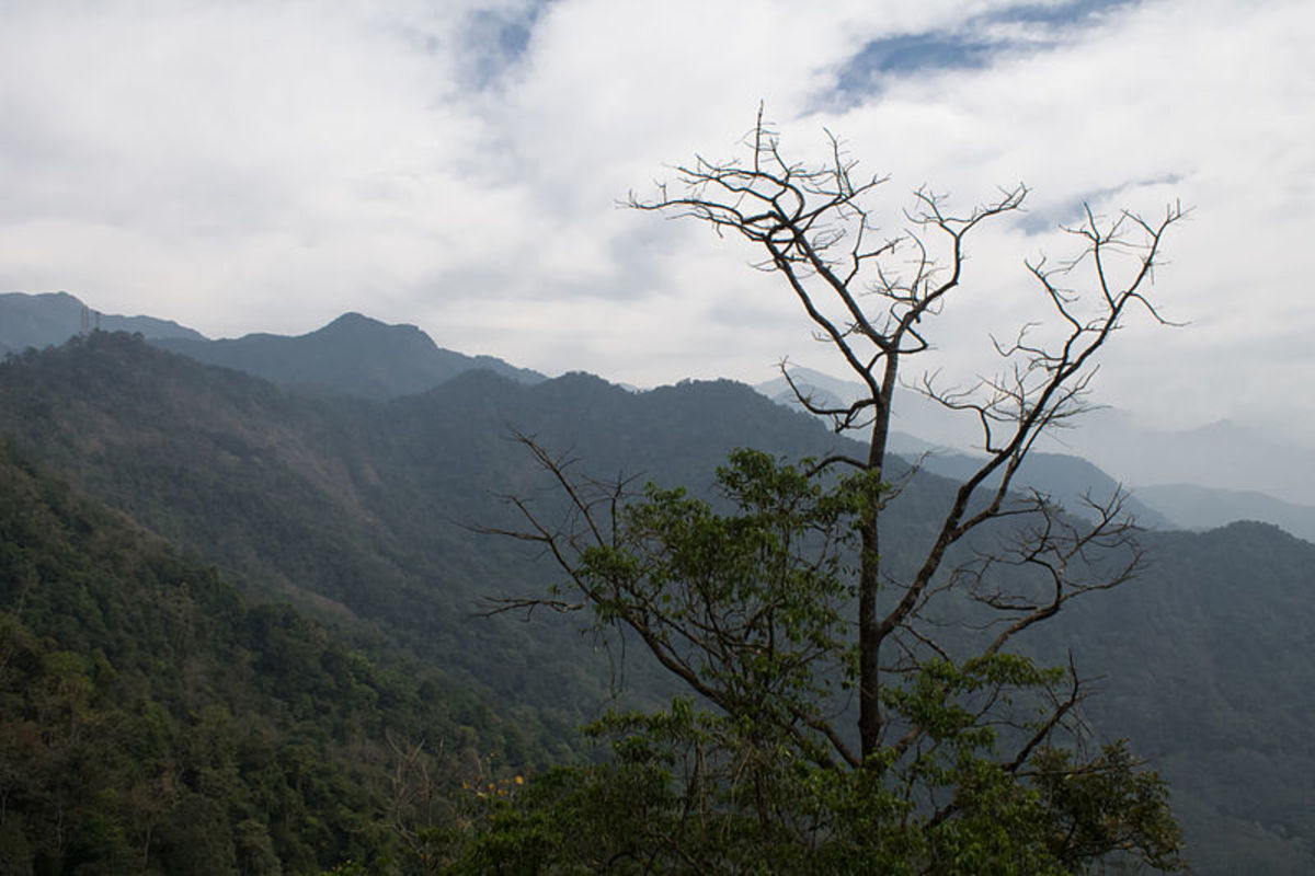A View from  Lakkidi Hill Station, kerala