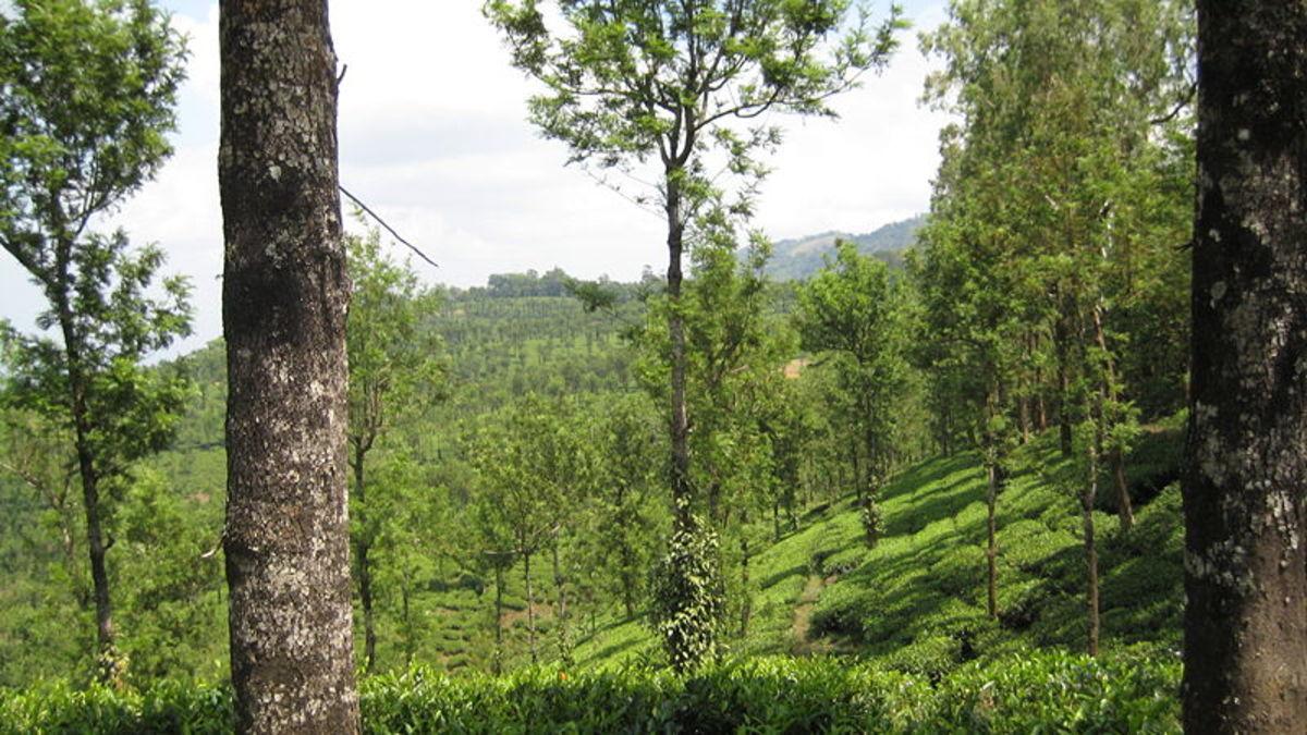 Nellampathy Hill Station, Kerala