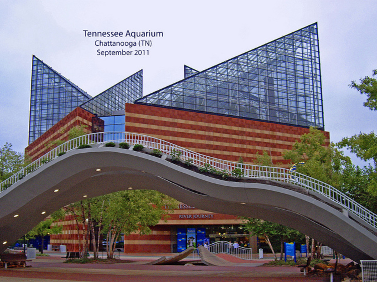 The Tennessee Aquarium; America's Top Ranked Aquarium