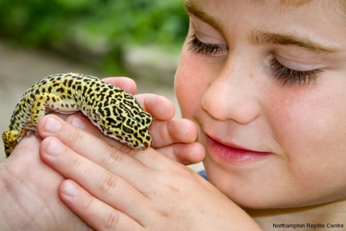 Leopard Gecko Care Sheet Amp Helpful Information Hubpages