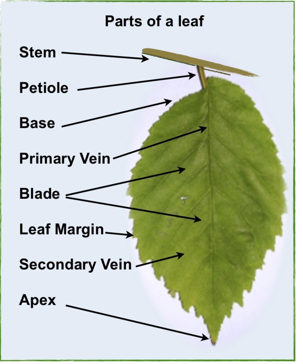 leaves-natures-food-factory