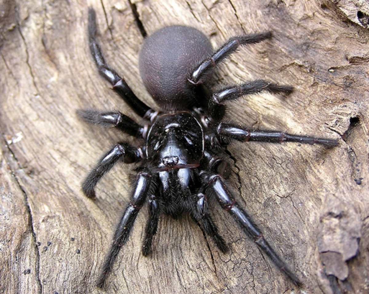 the-most-dangerous-spiders-in-the-world