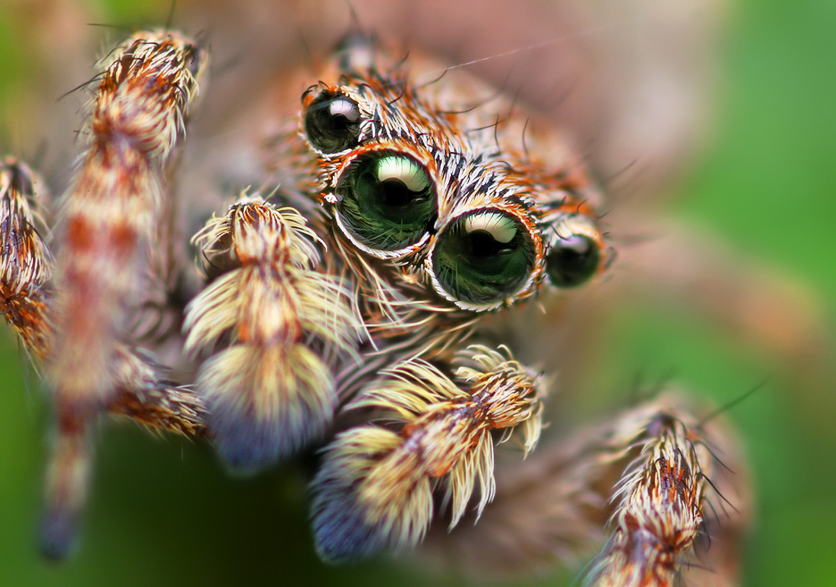 The Most Dangerous Spiders in the World : Interesting Facts about Spiders