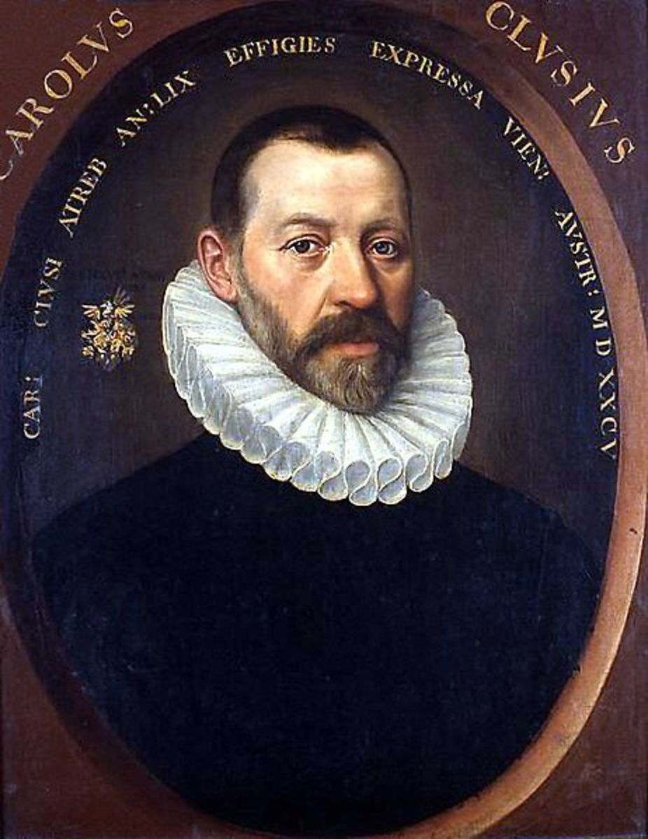 Charles de l'Écluse, who first introduced tulips to Western Europe in the sixteen century.