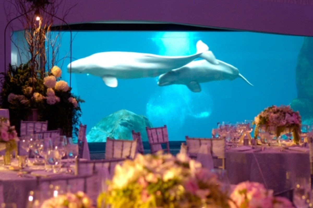 Georgia Aquarium´s Arctic Room of Ocean´s Ballroom