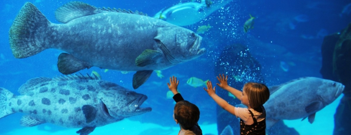 The real attraction of Georgia Aquarium is the possibility of getting real close to the sea animals
