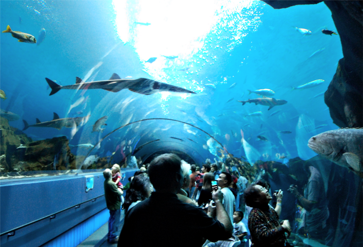 The underwater passages connect the different tanks holding sharks, beluga whales, penguins and sea turtles