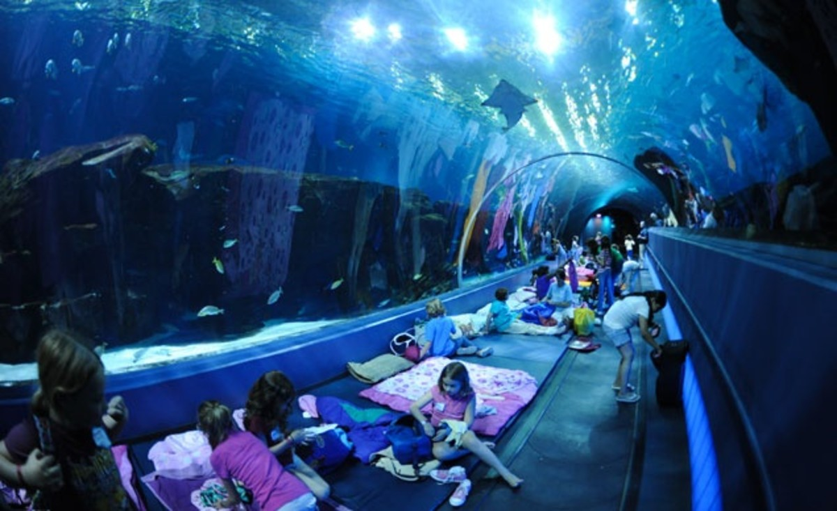 How about a sleep over under the sea?