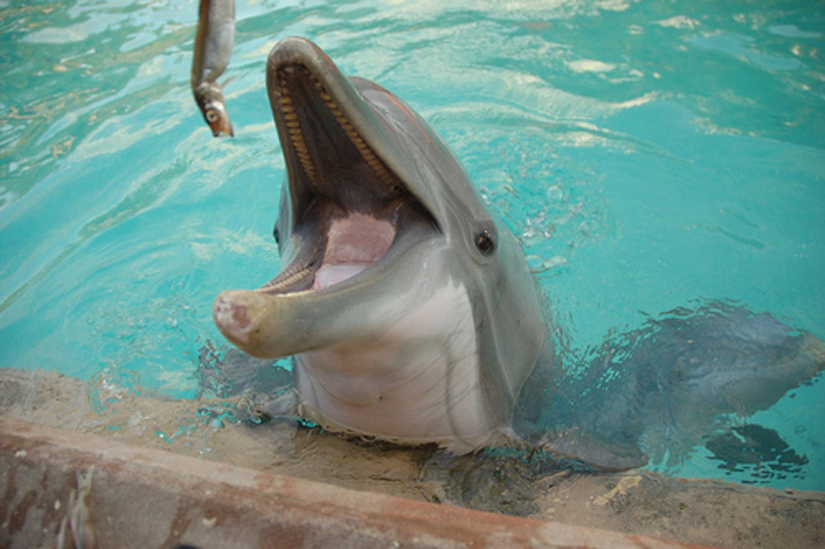 Fish seems to be the motivating factor toward most of dolphins' actions.