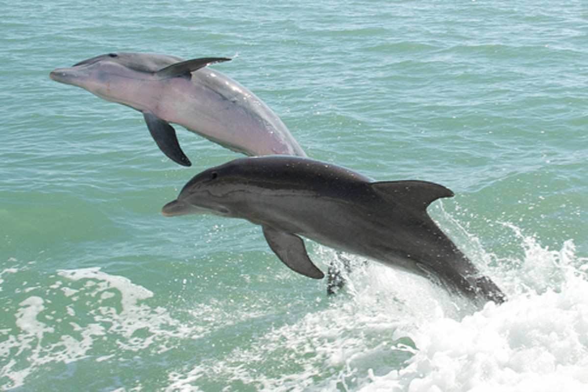 stupid-things-people-say-about-dolphins