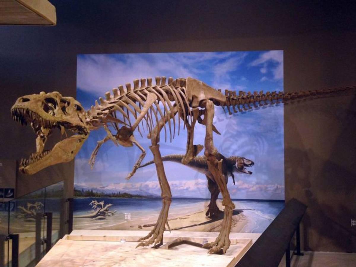 Lythronax skeleton at the Natural History Museum of Utah, Salt Lake City.