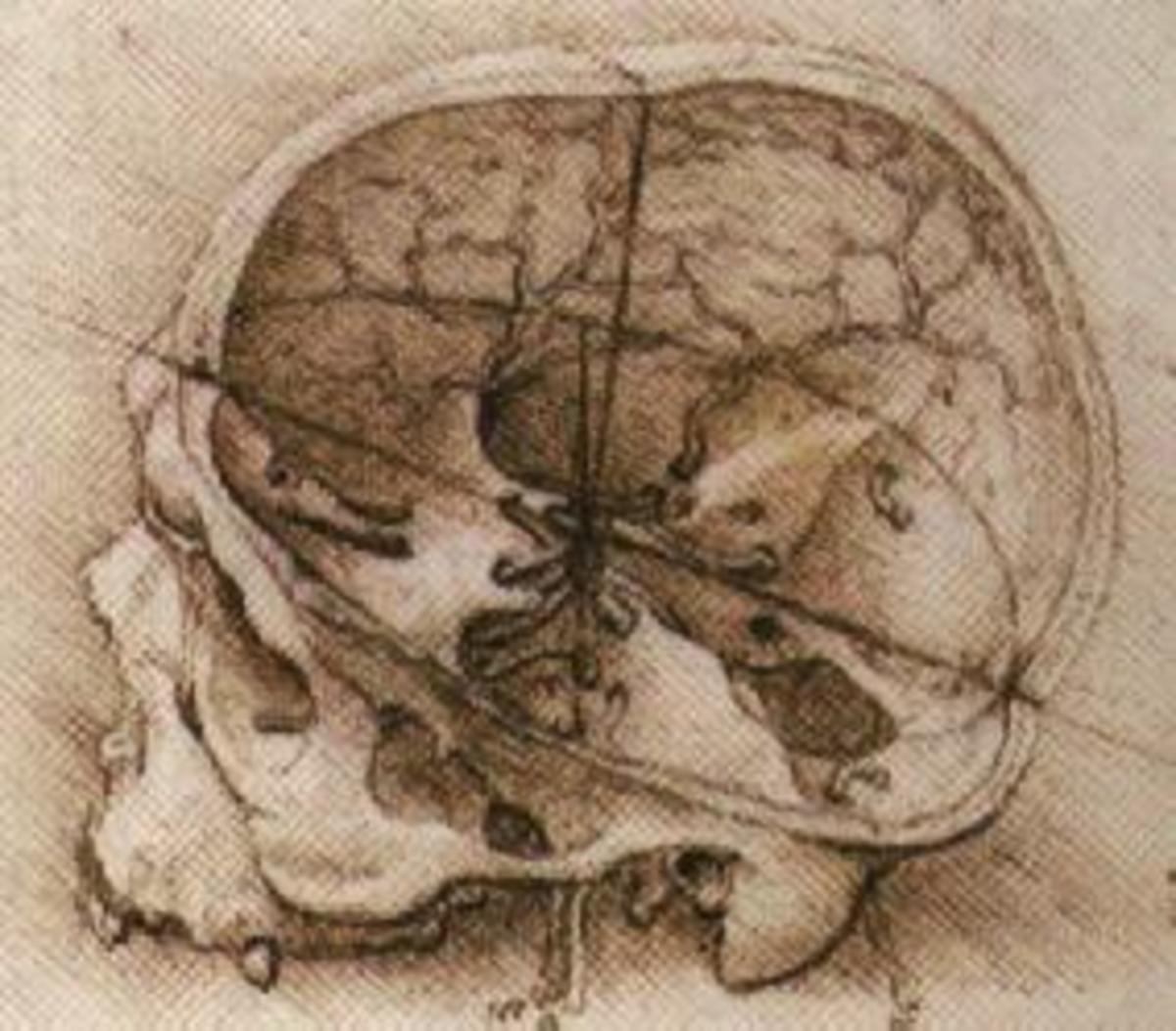 The Anatomy and Physiology Works of Leonardo da Vinci