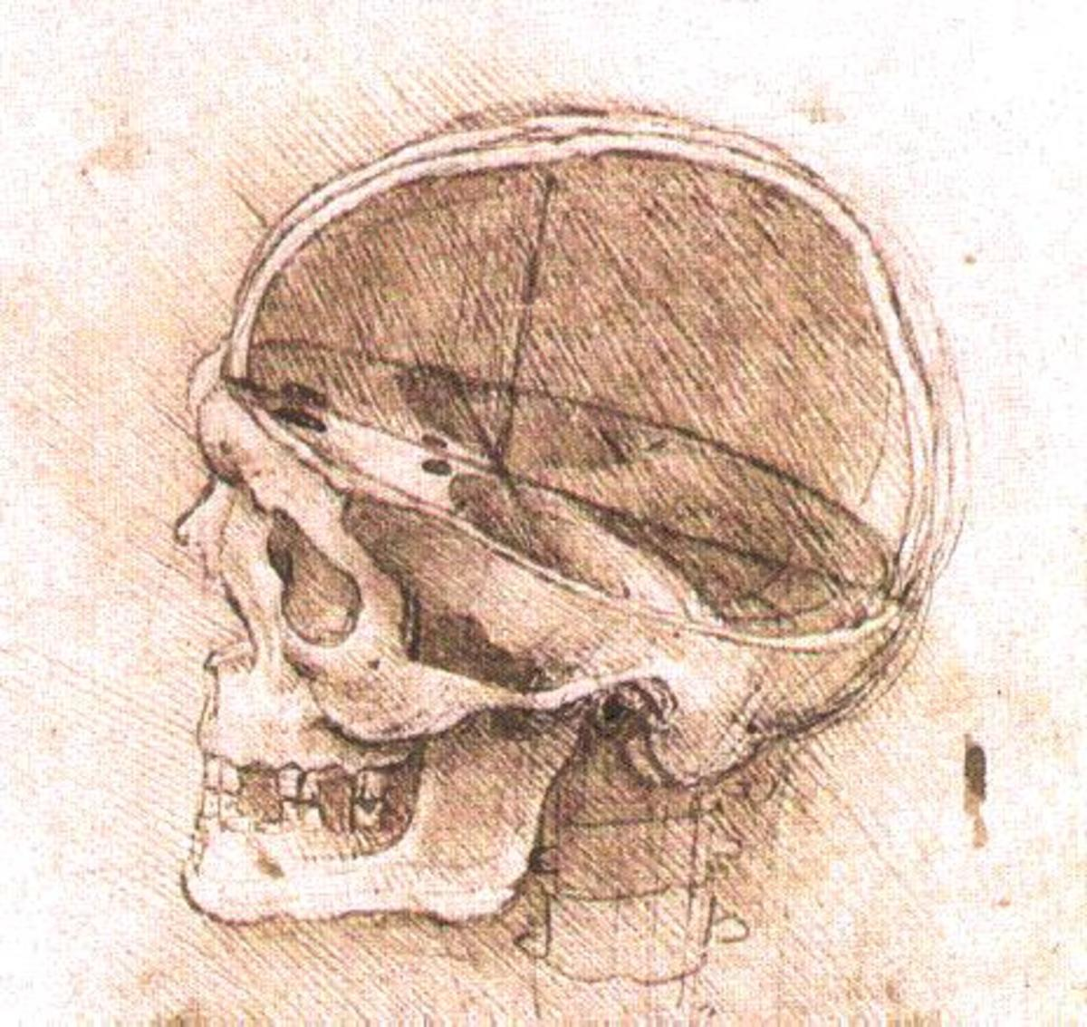 The Sensus Communis or Pineal Gland was   where Leonardo thought the soul resided.