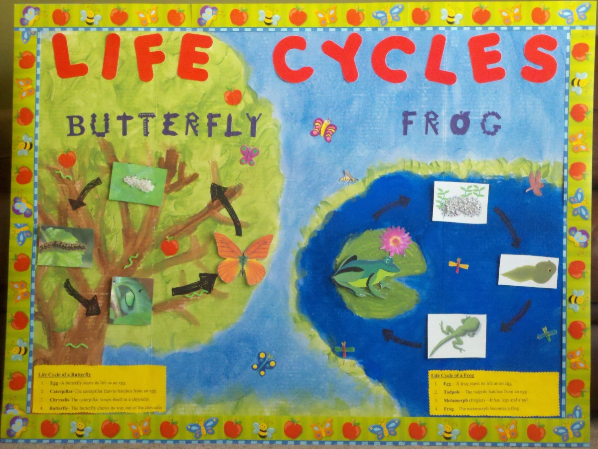 Bulletin boards can make learning new material fun.