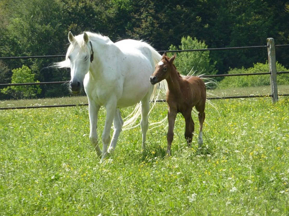 Mare and Colt in Spring Pasture