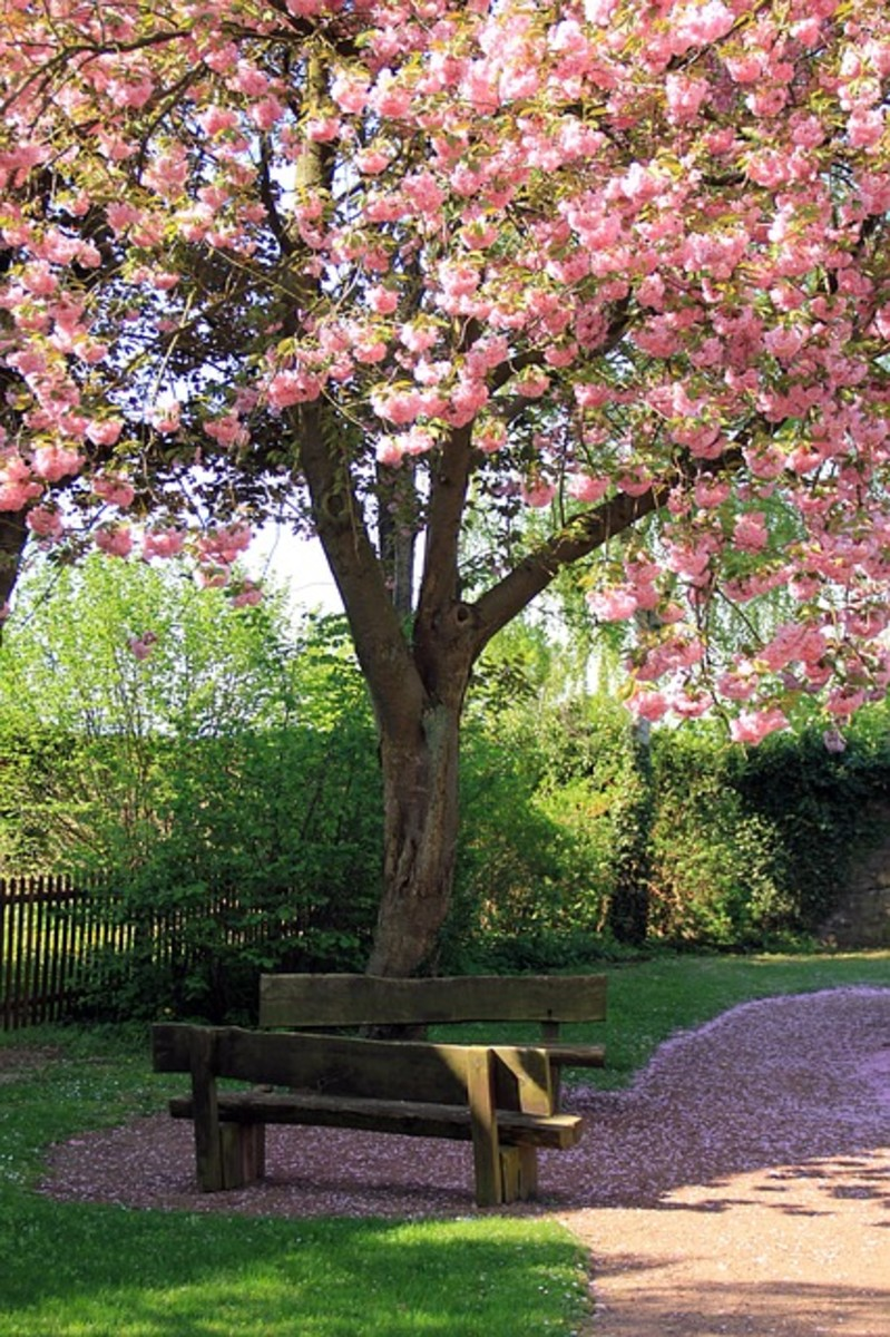 Spring Bank Tree