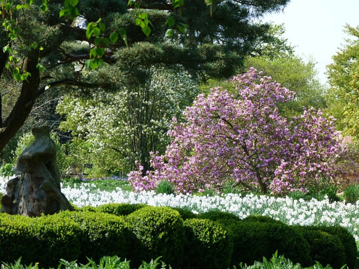Cherry Tree and Flowers in Spring Garden