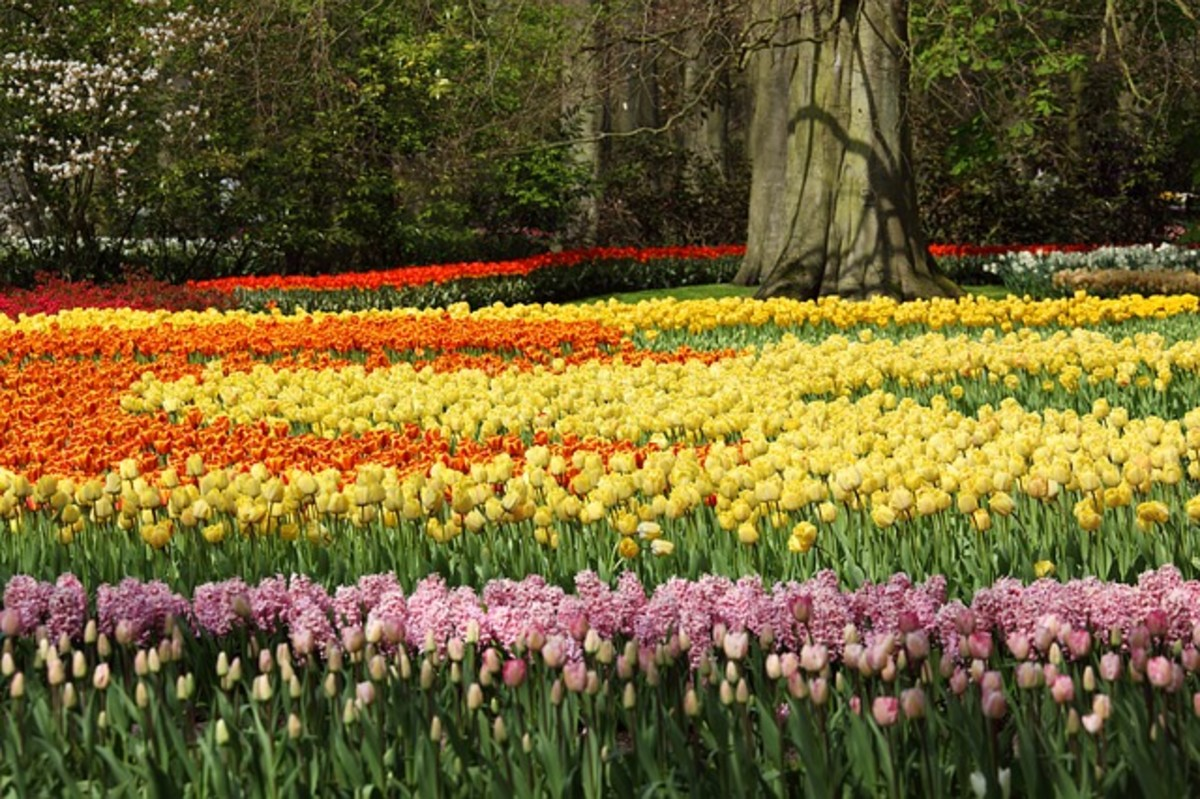 Tulips and Hyacinths Encircling a Tree
