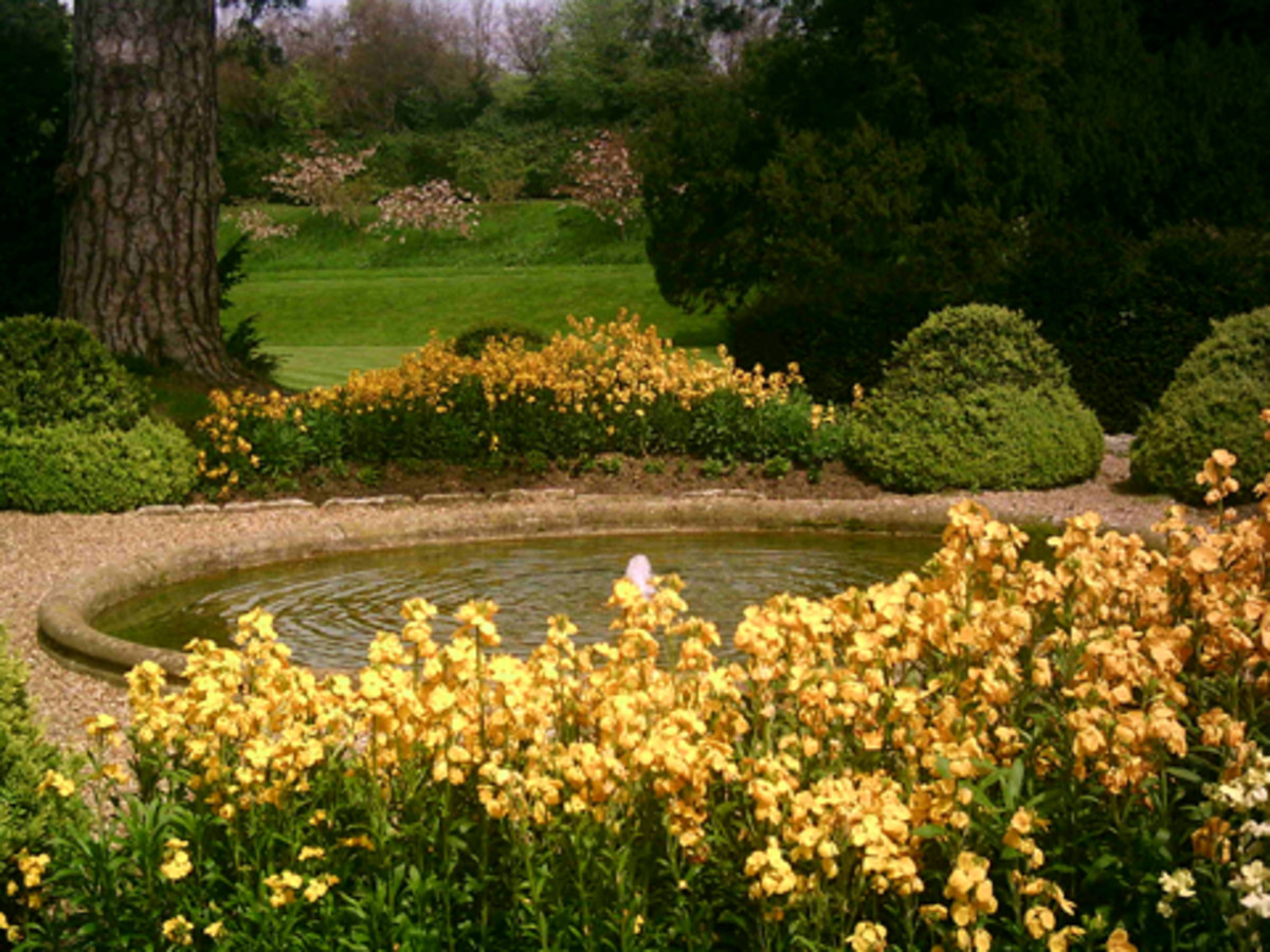 Spring Flowers, Trees and Fish Pond