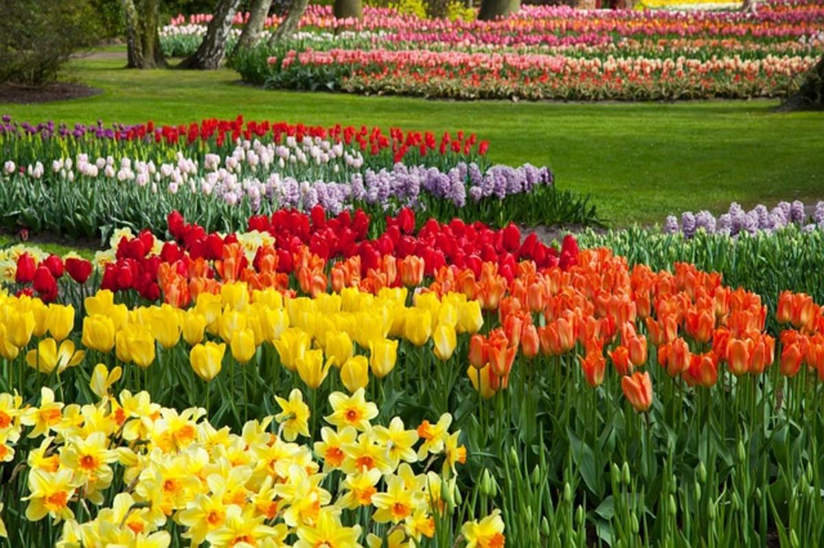 Formal Bulb Gardens