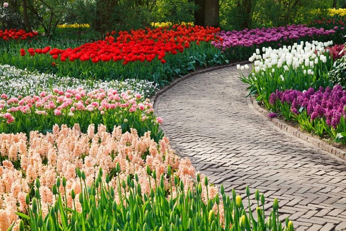 Spring Bulbs Blossoming in Garden