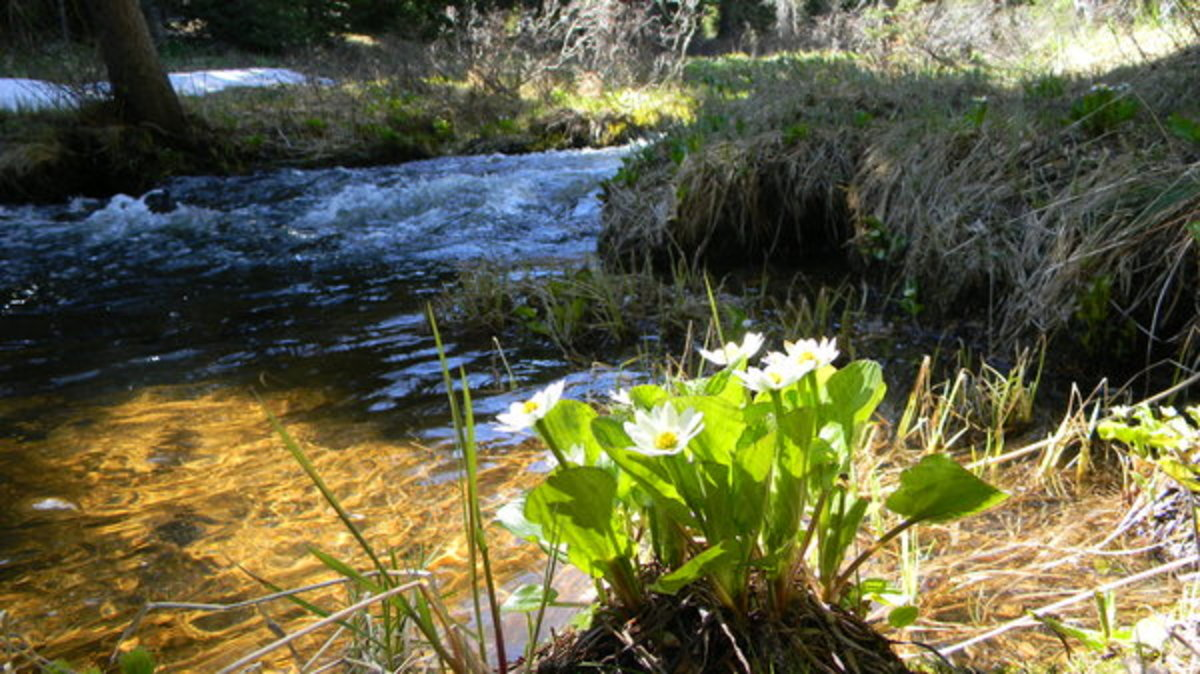 Spring by a Mountain Stream