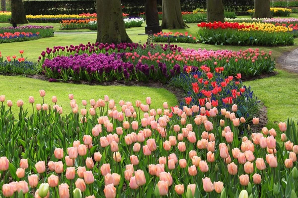 Spring Gardens in the Park