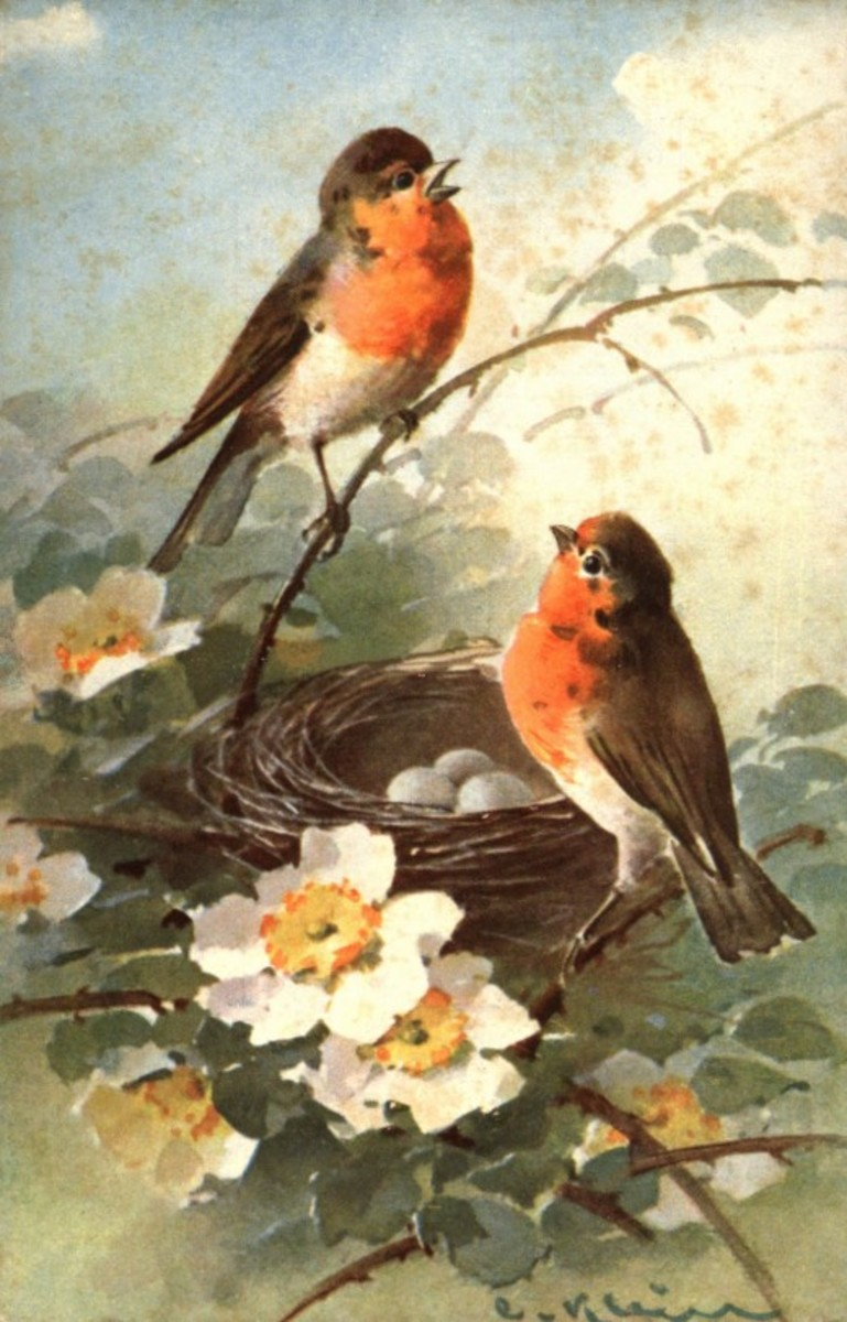Image of Birds in Early Spring